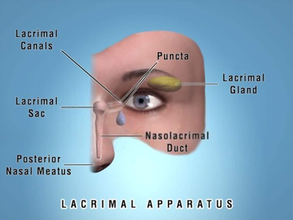 Lacrimal 2